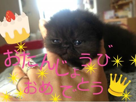 11)くろみちゃん