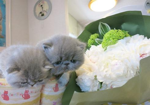 14)ミルミルちゃんへのお花♡