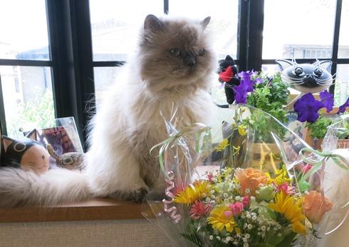 4)きれいなお花いただきました