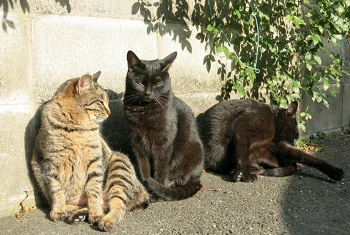 1)平和に暮らしていた3兄弟