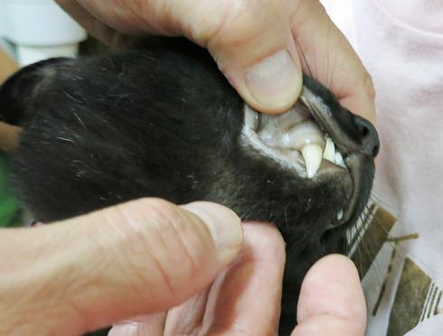 3)歯茎の色が真っ白