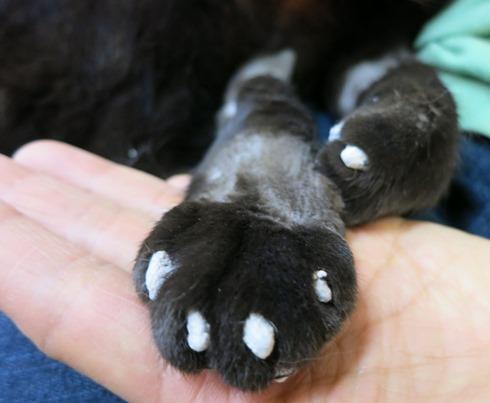5)爪はスカスカの軽石のよう