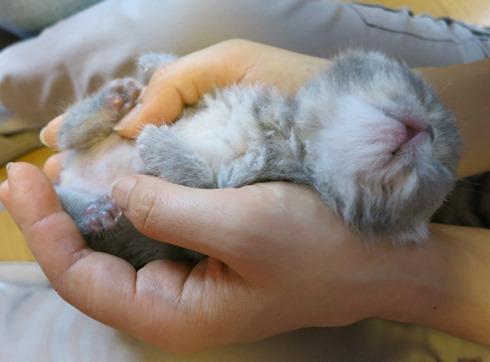 5)手の中で爆睡中