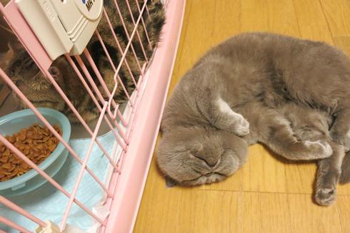 15)寝てるしー