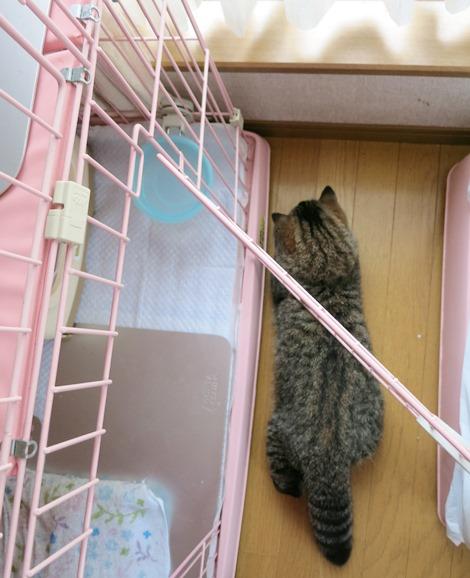 5)ケージの隙間のドアの下(笑)