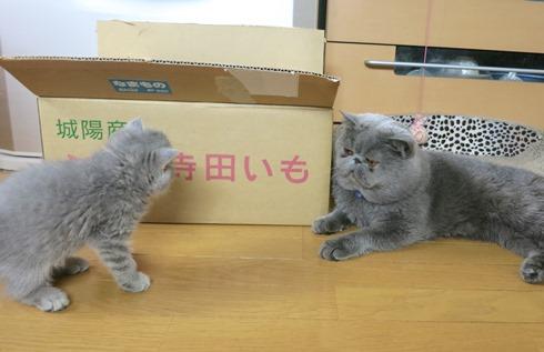 5)ええもんれちゅかー?
