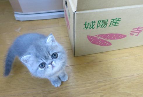 6)おいもスキれちゅ!