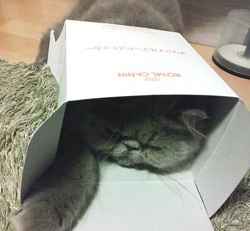 6)箱入り息子(笑)