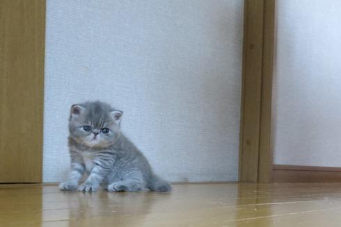 3)退屈れちゅー