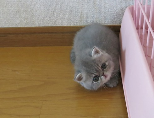 5)誰かが見てるれちゅ