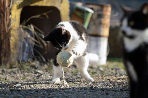 ボールと遊ぶチビッ子