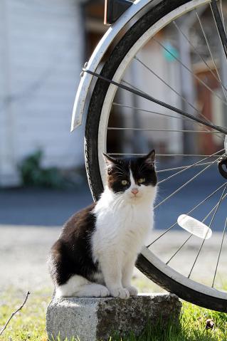 チビと自転車