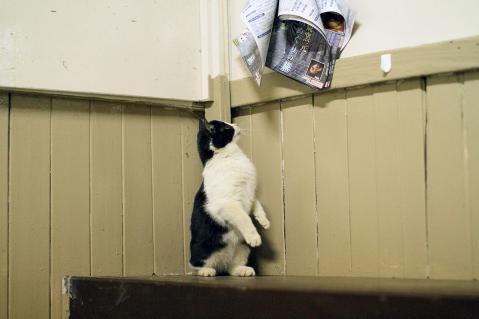チラシを読む猫