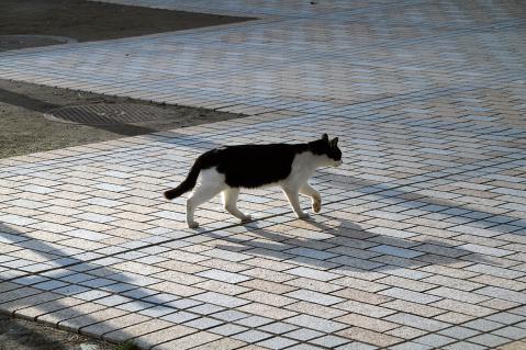 チョビ歩く