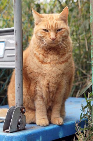 ジャンボ猫