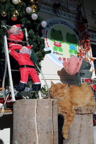 クリスマスディスプレイと猫