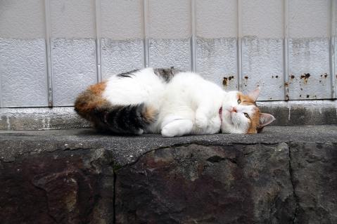 三毛猫のゴロン