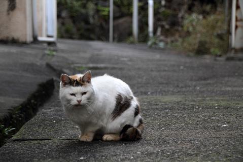 路地で見かけた白に毛