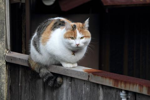 塀の上の三毛猫