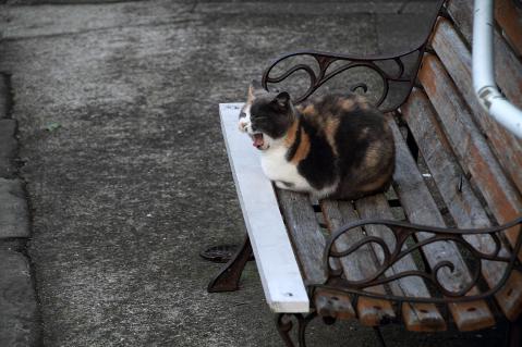 ベンチの上のアカちゃん