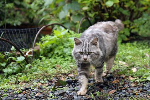 唐人屋敷跡の猫