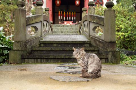 石橋の前の猫