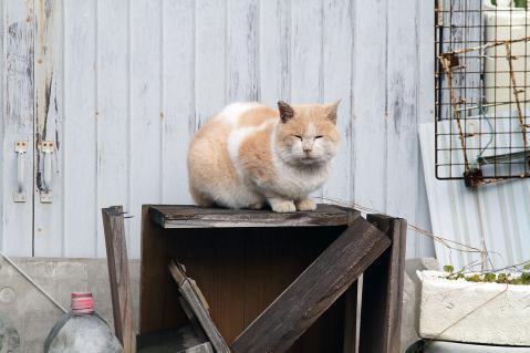木箱に座る白茶猫