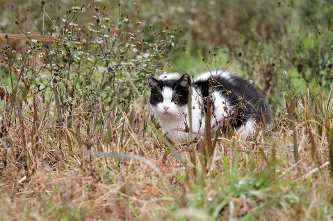 広場の白黒猫