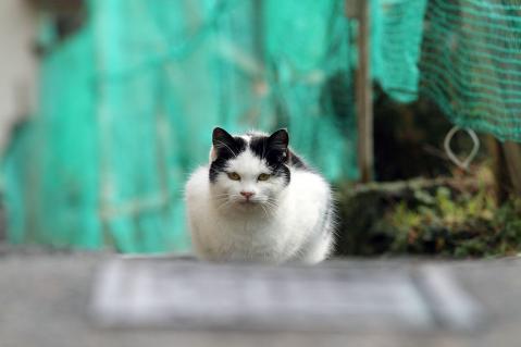 道の真ん中で座っている黒帽子猫