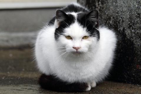 黒帽子猫のアップ