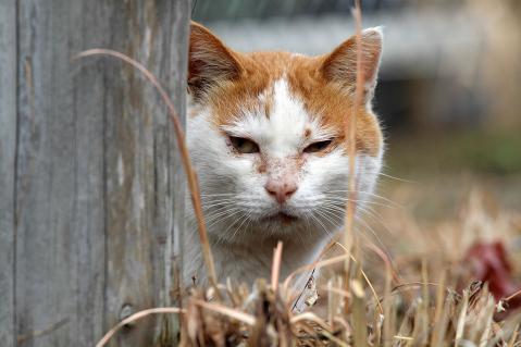 茶白猫のお母さん