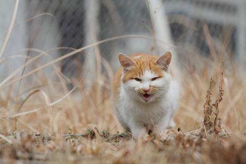 チビッ子猫が叫ぶ