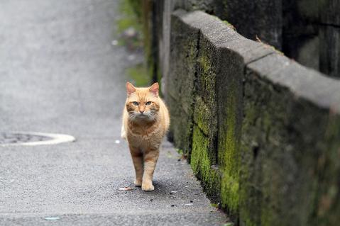 カツオと呼ばれた猫