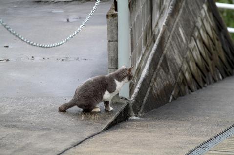 ジッと様子を見る猫