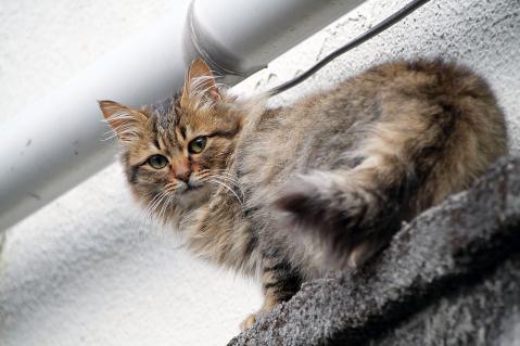 弊の上から見下ろす猫