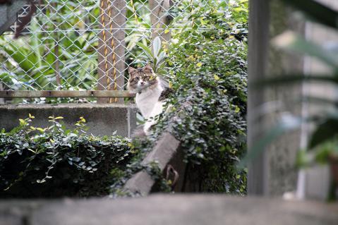 遠くに猫発見