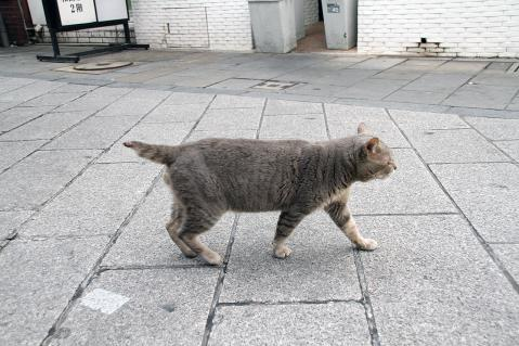 商店街を歩く猫