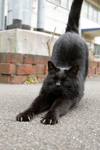 伸びする黒猫