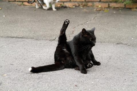 尻尾だけ白い黒猫