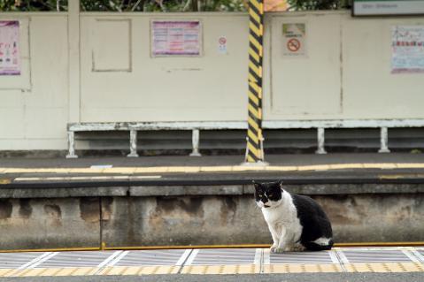 ホームにたたずむ白黒猫