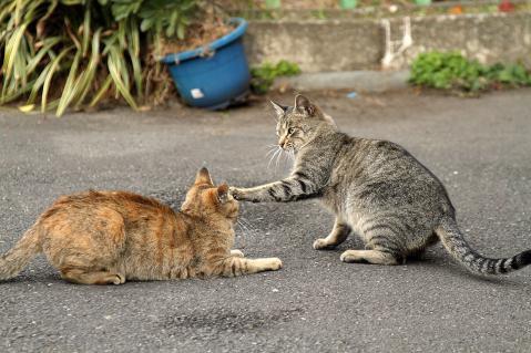 先制の猫パンチ