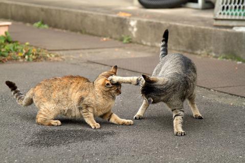 キジトラの猫パンチ