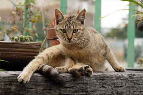 ゆとりの茶猫