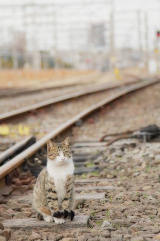 線路に佇むサバ白