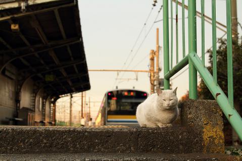 さよなら白猫