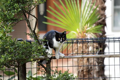 黒覆面の猫