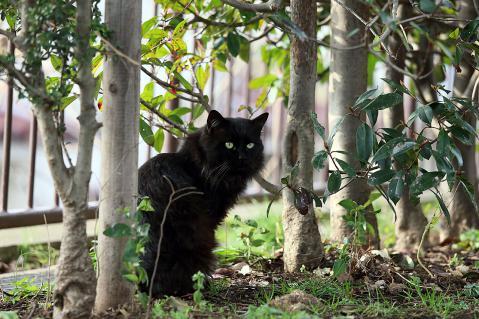 ゴージャスな黒猫