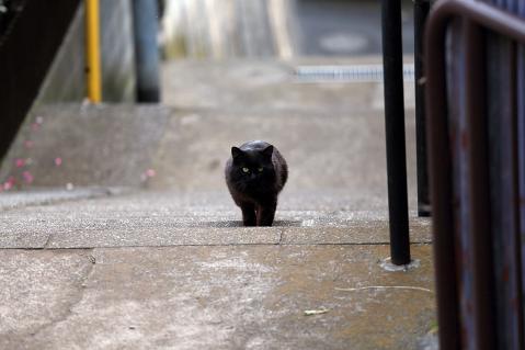 階段を上る黒猫