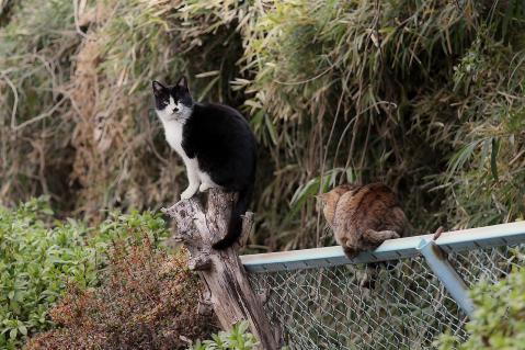 切り株とフェンスの上で寛ぐ猫