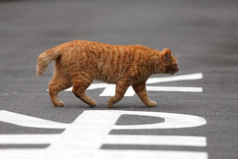車道を横切る猫